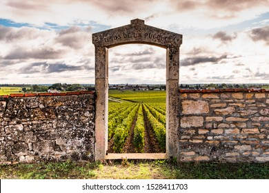 France Burgundy 2019-10-02 beautiful scenic autumn landscape of Bourgogne Clos de la Pucelle grand cru vineyard, old fence with arch in the morning
