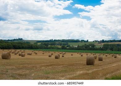France, Lot et Garonne, Nérac, Field of wheat