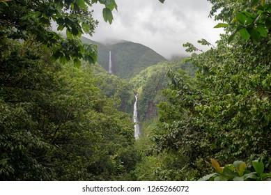 France, Guadeloupe , Basse Terre, Guadeloupe National Park, Capesterre Belle Eau