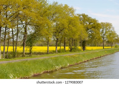 France, Loire. Trees and mustard fields along the banks of Canal lateral a la Loire