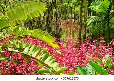 France, Martinique, the picturesque garden of Balata