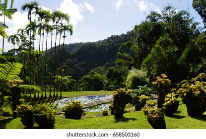 France, Martinique, the tropical  garden of Balata, Lesser Antilles