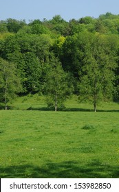 France, Normandie, green meadow in Lisors