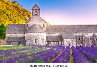 France, Provence. Incredible landscape of Abbey Senanque, sunset scene. Blooming lavender valley at foreground. Medieval stone construction of abbey established on 1148 year. International landmark.