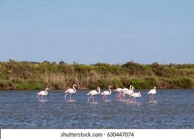 France Provence Languedoc Roussillon Camargue Pink Purple Flamingo
