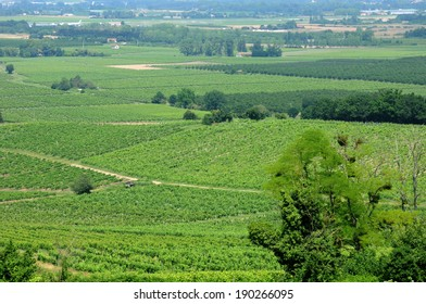 France, the vineyard of Monbazillac in Dordogne
