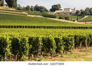 Saint-Émilion, France. Vineyards at the Jurisdiction of Saint-Emilion, a World Heritage Site since 1999