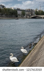 France's Seine River with the Eiffel Tower and Swans