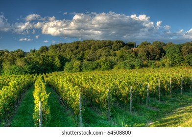 Franciacorta Vineyard before sunset, HDR image