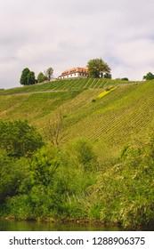 Franconian Vineyard of the Vogelsburg