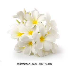 frangipani flower isolated on white on white background