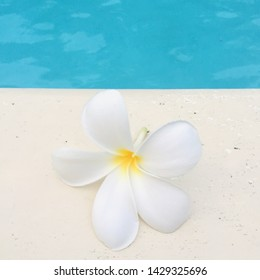 Frangipani flower poolside tropical travel vacation background with copy space stock photo photograph image