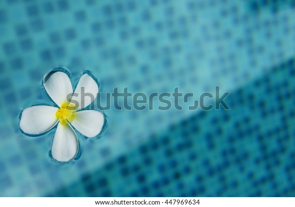 Frangipani flower in the swimming pool concept, background.