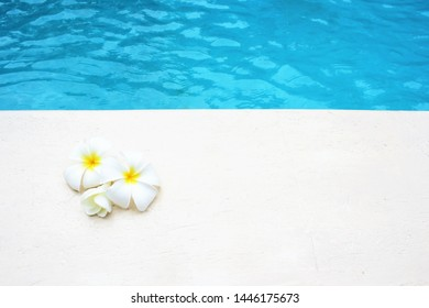 frangipani flower tropical poolside background for spa resort travel with copy space stock photo photograph image picture
