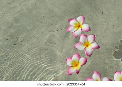 Frangipani flowers in clean water. Riviera Maya. Summer vacation.