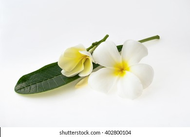 Frangipani flowers and leaf on white background
