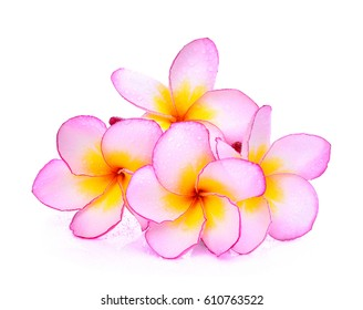 frangipani flowers with water drop isolated on white background