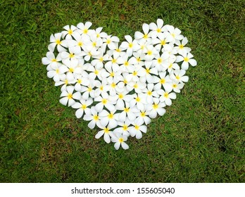 Frangipani in heart shape on green grass background