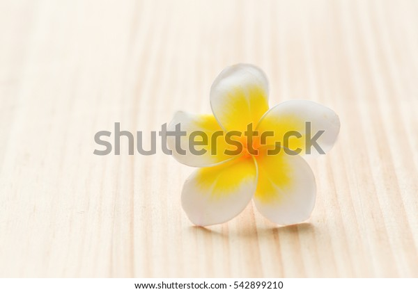 Frangipani isolated on wooden board
