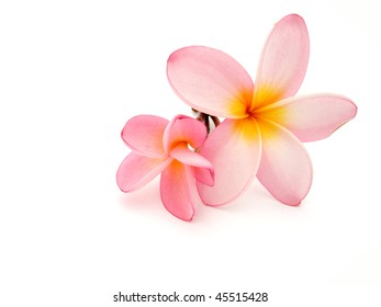 Frangipani on withe background