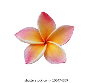 Frangipani (plumeria) flower isolated on white � clipping path included