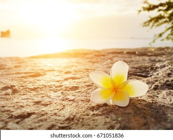 Frangipani ,Plumeria flower on the floor with sunset background at the sea beach