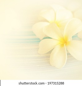 Frangipani (plumeria) in soft color style for background