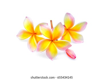 frangipani or plumeria (tropical flowers) isolated on white background