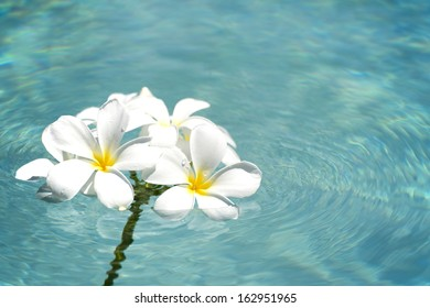 frangipani spa flowers over shiny water background-9