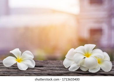 Frangipani white flower on wooden table with sun light nature background