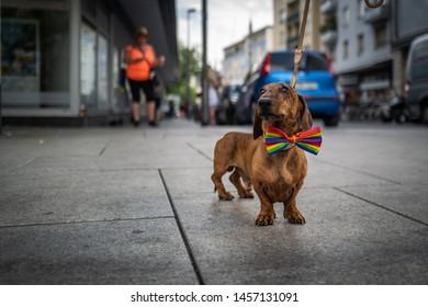 Frankfurt, Germany - July 20, 2019: A dog at the Christopher Street Day in Frankfurt.