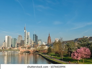 Frankfurt am Main with blooming Sakura, Germany