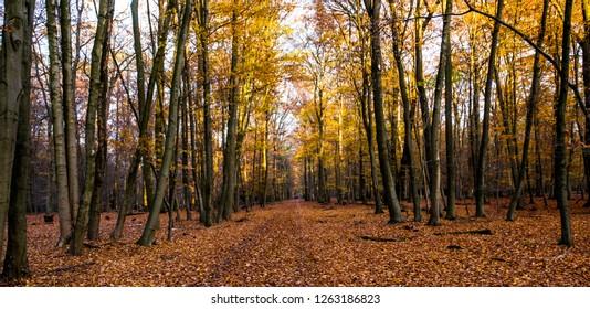 Frankfurt Stadtwald autumn wonderland
