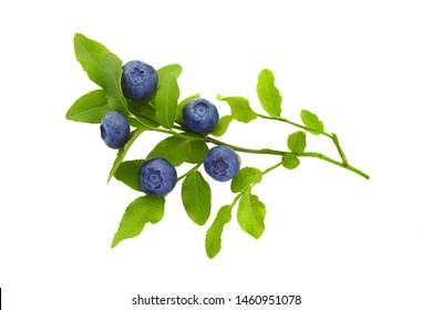 Frash blueberry branch isolated on white background