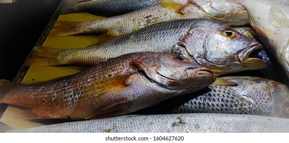 Freah fish at a fish market in Keamari Karachi Pakistan