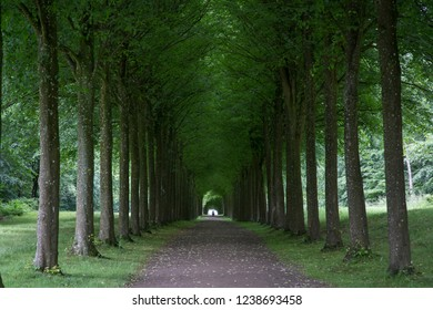Fredensborg, Denmark - July 2, 2017: A tree alley in the park at Fredensborg Palace