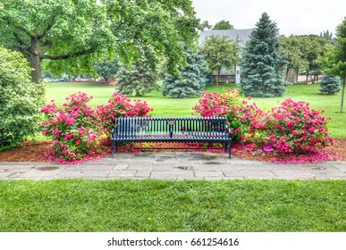 Frederick, USA - May 24, 2017: Colorful bench with bright pink and red roses bushes with many flowers in Bakery Park by Carroll Creek in Maryland city during summer