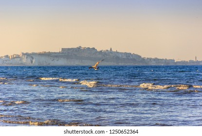 Free flight of seagull over sea: in the background Vieste old town  perched on the promontory. Summertime. Gargano coast: bay of Vieste.-(Apulia) ITALY-