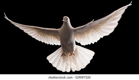 dove flying images stock photos vectors shutterstock