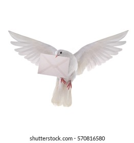 free flying white pigeon with the letter isolated on a white background