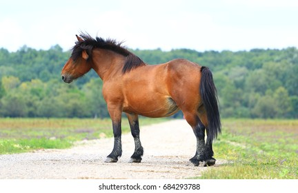 Free Horse in the Field