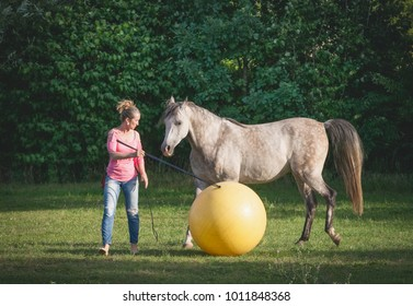 Free horse playing a big yellow ball with a woman. Horsemanship scene. Horse free dressage