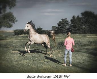 Free horse runs around a women. Horsemanship scene .  Horse free dressage or groundwork