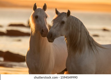 Free Horses on the beach /water