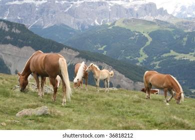 free horses on Italian mountains
