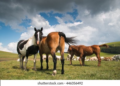 Free horses in the park