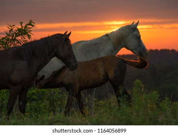 Free range horses at sunset in the Appalachian Mountain of Kentucky
