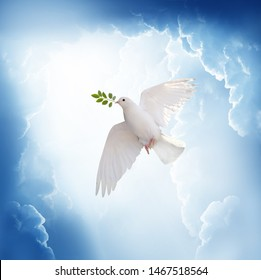 A free white dove holding green leaf branch flying in the sky.