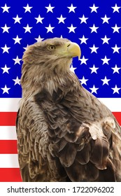 Free wild eagle with american flag in background