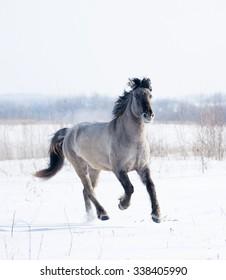 free wild horse in winter